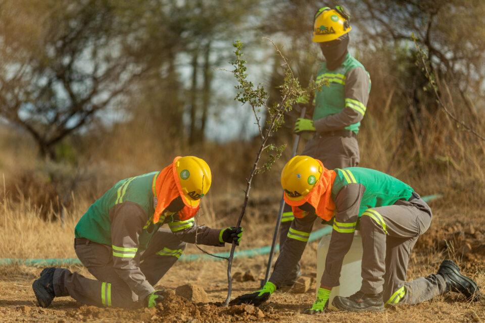 Reforestación en Compañía Minera Cuzcatlán